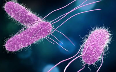 ÁCIDO HIPOCLOROSO – potente desinfectante para eliminar las ENTEROBACTERIAS